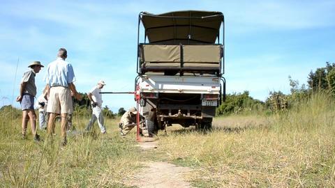 African savannah Stock Video Footage