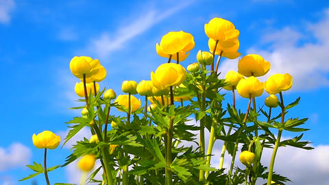 yellow flowers Stock Video Footage
