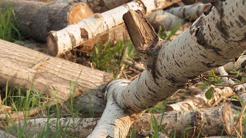 Logs Stock Video Footage