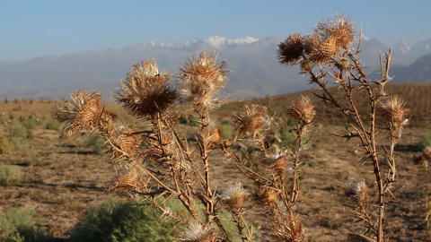 Prickly plant Stock Video Footage