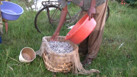 fishermen Stock Video Footage