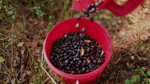 bucket with blueberries Footage