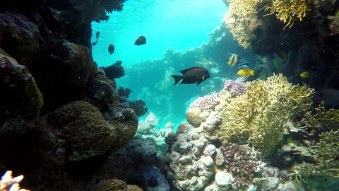 Sea, Exotic fishes Footage