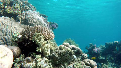 Life under the water. Warm tropical sea Footage