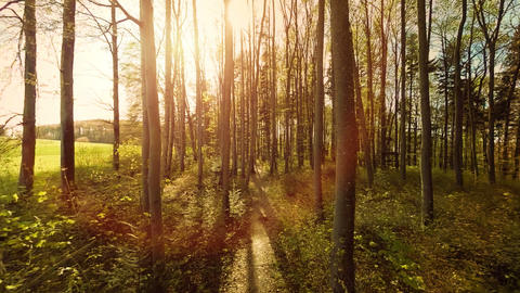 Sun flare light nature plants aerial view trees forest silhouette Footage