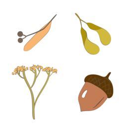 Autumn seeds Vector