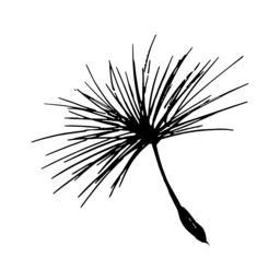 Dandelion seed pencil sketch ベクター