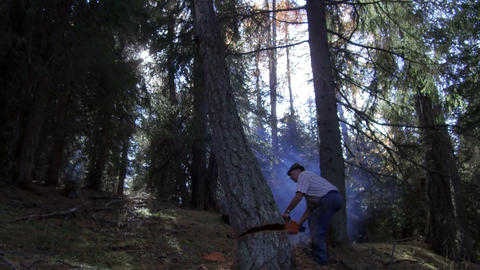 woodcutter, cut tree with chain saw in the woods of Alta Badia, Dolomites Footage
