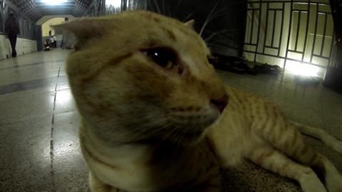 Cat Close-up Camera Live Action