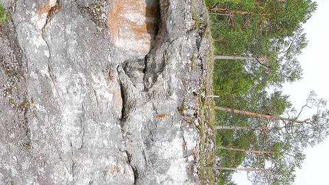 Vertical video. Trees on the rock, Russia Live Action