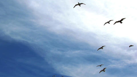Seagulls in the sky Live Action