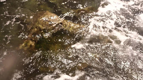 Clear sea water with brown stones at the bottom Footage