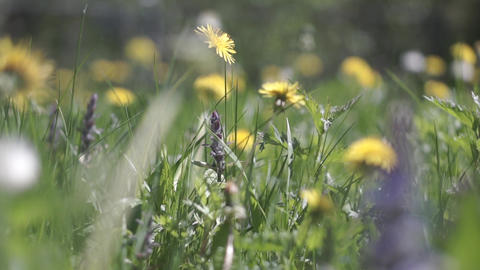 ��_amera moves through the beautiful flowers and grass in... Stock Video Footage