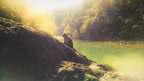 Monkey on a rock by the river in Khao Sok Natural National Park forest in south Fotografía