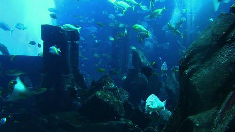 Tropical fish in the aquarium. Dubai GIF
