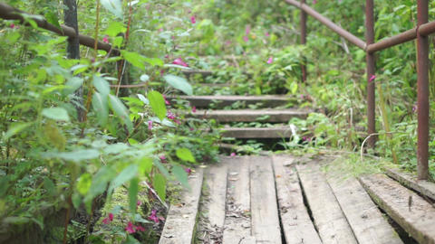 Broken wooden bridge and stairs in the forest Footage