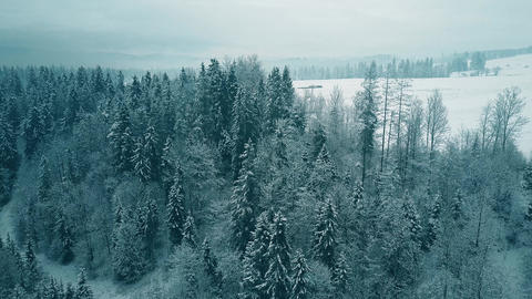 Aerial view of a snowy forest in winter Footage