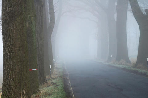 Tree avenue with road in the fog Photo