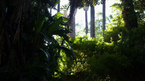 Panorama of a tropical forest Footage