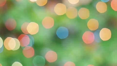 Colorful bokeh of Christmas lights tree. Static Footage