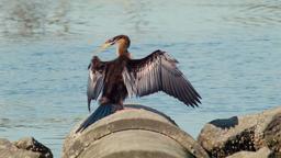 2014 Perth Wildlife 5 Image