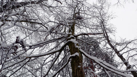 Winter snowy forest trees 4k Footage