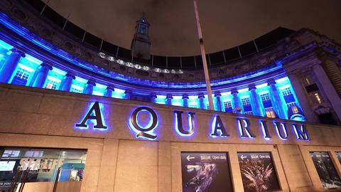 London Aquarium by night - LONDON, ENGLAND NOVEMBER 20, 2014 Live Action
