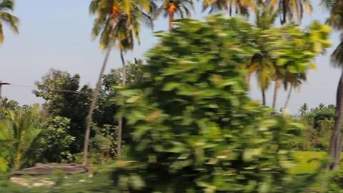 Gorgeous Indian farm Live Action