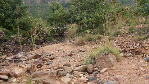 bush of Deccan plateau (India) Live Action