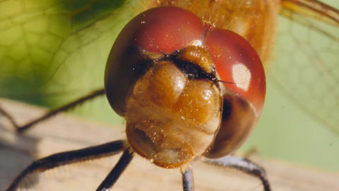 view of the close-up of a dragonfly Footage