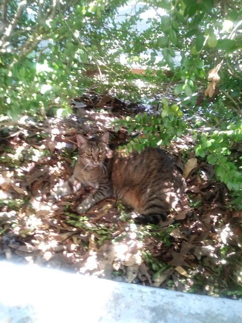 kitty in camoflauge Photo