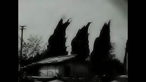 Wind swept trees Footage