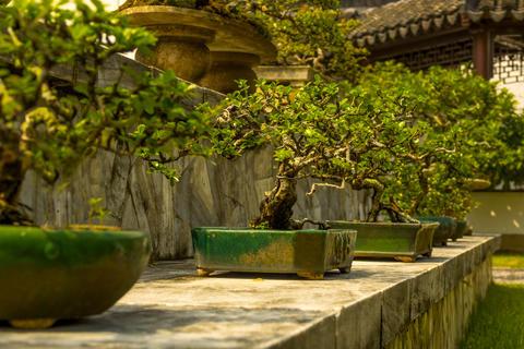 Bonsai in the Japanese Garden of Singapore Photo