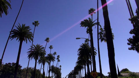 Palm trees in Beverly Hills California – LOS ANGELES, CALIFORNIA NOVEMBER 8,20 Live Action