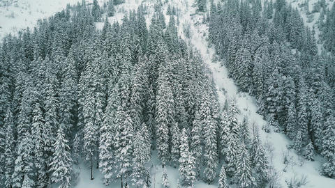 Aerial view of a mountainous forest in the snow Footage
