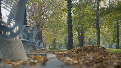 Autumn leaves falling from the trees near benches on a beautiful sunny day in Footage