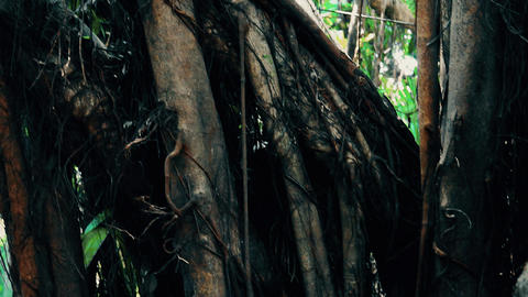 Close Up of Jungle Vegetation Footage