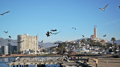 Coquimbo, Chile Docks Footage