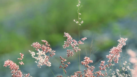 Flowers In Nature Background stock footage