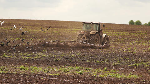 Tractor plowing land for sowing cereal crop Footage
