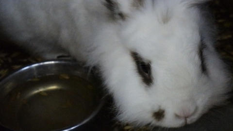 White fluffy rabbit Footage