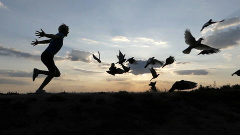 Young man runs and drives away doves at a lawn at sunset in slo-mo 영상물