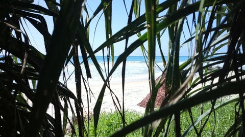 View from grass jungle on Indian ocean Live Action