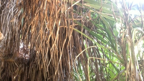 Overgrown grass and stunted palm in winter Live Action