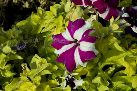 Colorful beautiful flower petals フォト