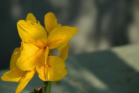 Amazing closeup of bright yellow petal flower Photo
