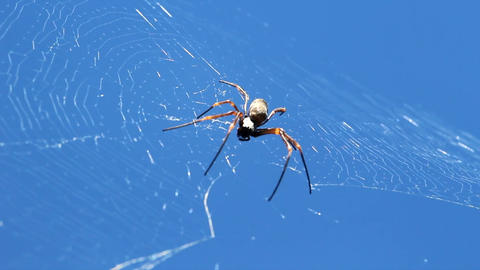 Spider On The Web With Blue Sky Background (2) 영상물