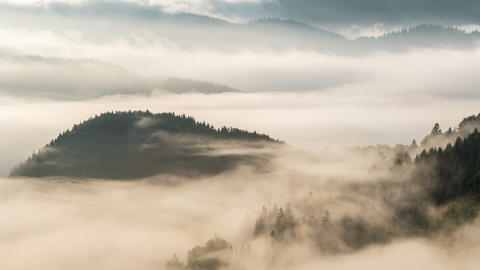 Foggy forest landscape in colors of the morning time lapse Footage
