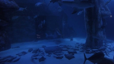 Sharks swimming underwater among other fishes species inside fish tank aquarium Footage