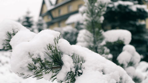 Pine branches covered with snow in winter 영상물